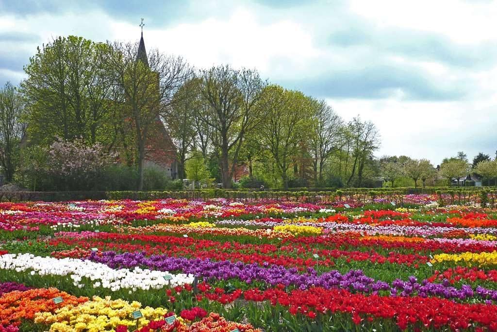 Stichting Hortus Bulborum Limmen