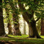 Bos & Duinwandelingen maken in Castricum